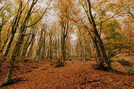 Beautiful day in the misty autumn forest with creek Banco de Imagens