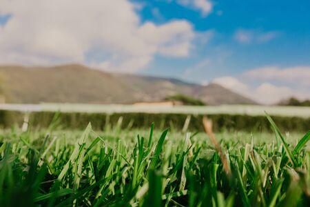 Green grass texture background, Green lawn, Backyard for background, Grass texture, 版權商用圖片