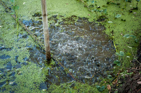 insipid: polluted water