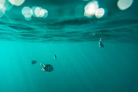exoticism saltwater fish: Breathtaking underwater view Stock Photo