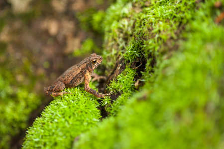 natural habitat: frog in natural habitat,asia Stock Photo