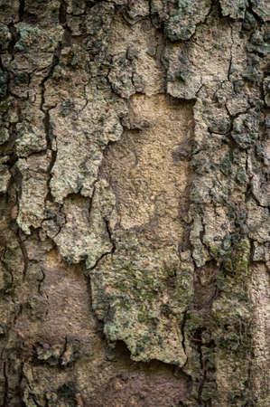 bark: background of tree bark texture