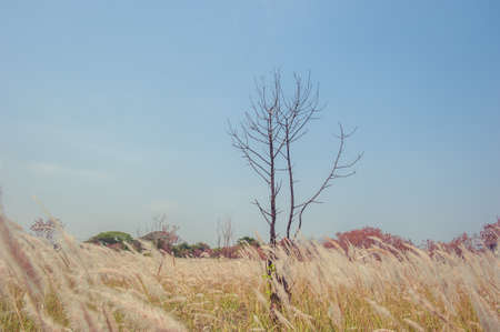 green brown: Grass field landscape at nature Stock Photo