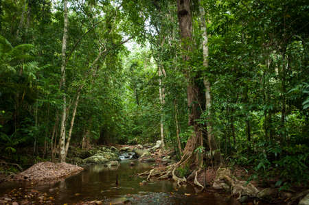 Tropical rain forest with green trees Stock Photo