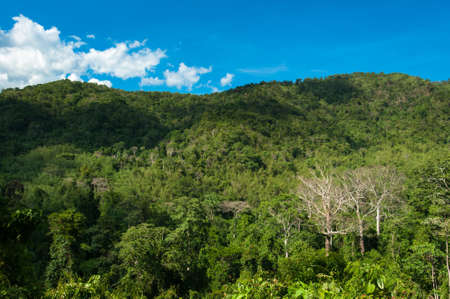 evergreen forest: Hill Evergreen Forest,Khao Yai National Park Thailand Stock Photo