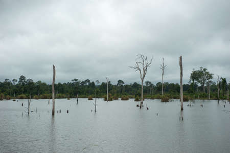 Dead trees on a water dam,Thailand