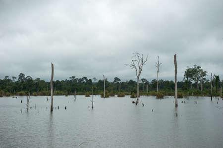 arboles secos: �rboles muertos en una presa de agua, Tailandia