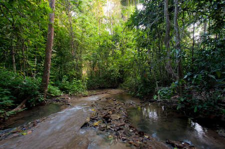 Landscape rain forest National Park in Thailand Stock Photo
