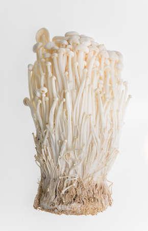 Golden needle mushroom on white background Stock Photo