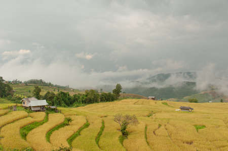 little hut in shade with rice paddy at pa-pong-peang rice terrace north Thailand.