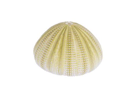 Sea urchin shell isolated on a white background with clipping path Banco de Imagens