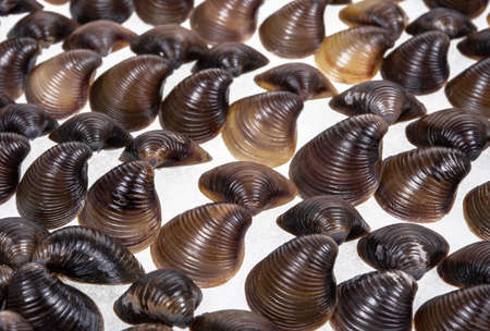 Shells collection : set of various mollusk shells on wood tray background.