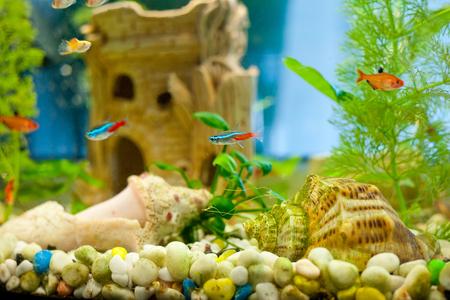 freshwater aquarium plants: cute little fish in an aquarium Stock Photo