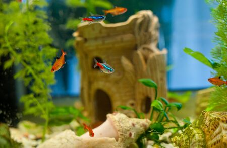 freshwater aquarium plants: Underwater world. Coral fishes of Red sea. Egypt Stock Photo