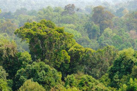 Tropical jungle in Laos, Asia. photo