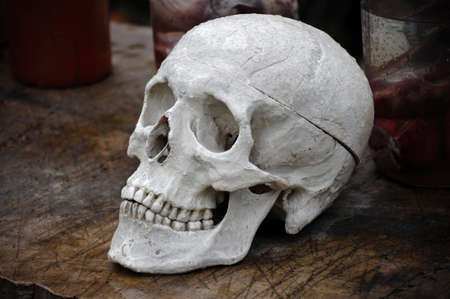 Skull on the old table. photo