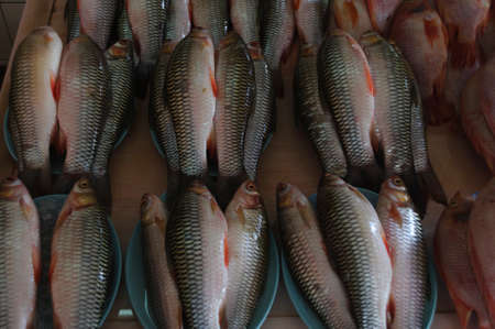 fish market: Food fish decorated for sale at a fish market.