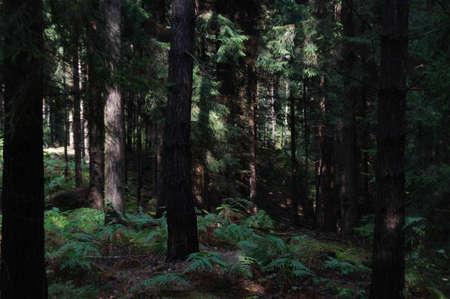 saxony: Wild forest in Germany, Saxony Switzerland.