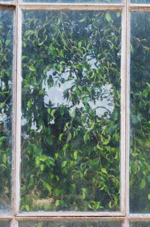 window pane: Abstract background, plants behind a dirty window pane.