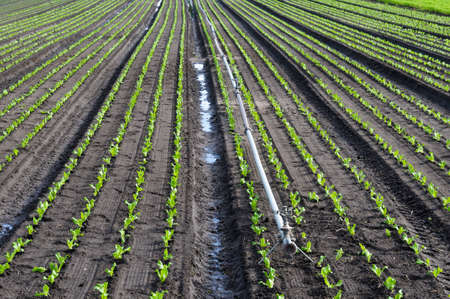 irrigation field: Field crops and irrigation system. Stock Photo