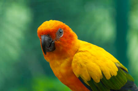 red color: Portrait of a colorful parrot.