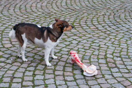 Mixed-breed dog is faced with a too large bones.