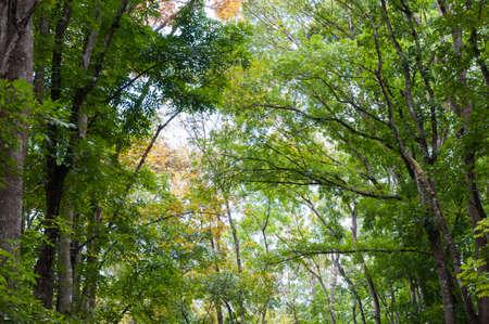 Mahagoni Wald auf der Insel Bohol, Philippinen.