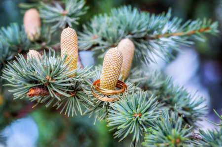 two wedding rings on pine cones wife