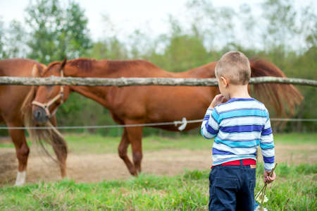Boy watching horses