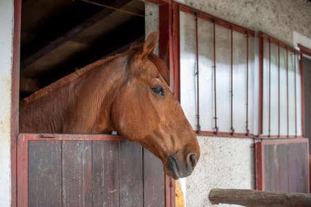 horse head Stock Photo - 19482247