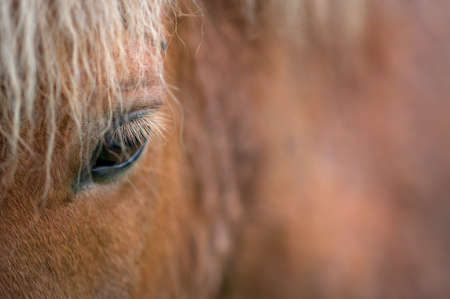 Horse Eye Stock Photo - 19467534