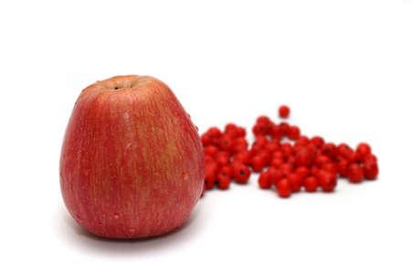 bunchy: Apple with ashberry (rowanberry) near on white (small DOF,focus on apple)
