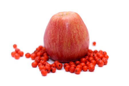 bunchy: Apple with ashberry (rowanberry) around on white (small DOF)