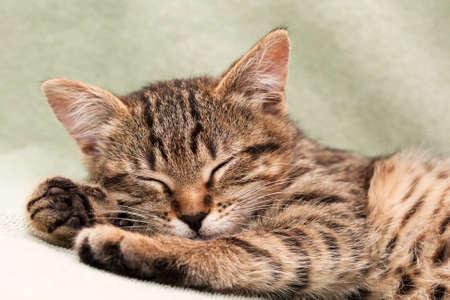 Tabby 고양이 침대에 누워