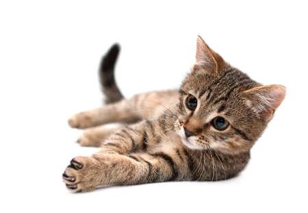 흰색 배경에 거짓말 얼룩 무늬 고양이 스톡 콘텐츠