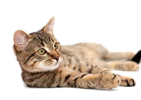 lying on side: Tabby cat lying on white background Stock Photo