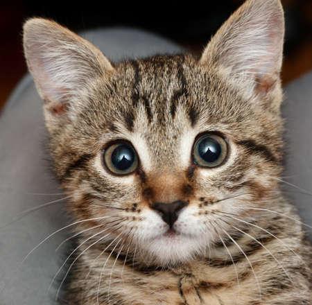 angry surprised kitten Archivio Fotografico