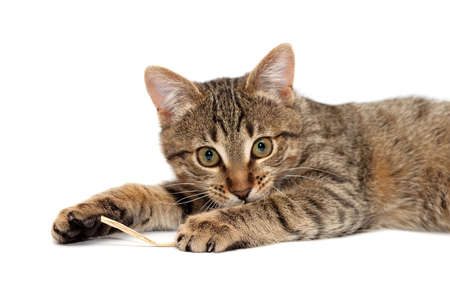Tabby Cat laying and Looks with interest Stock Photo