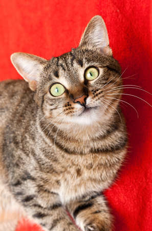 nice cat has a rest on red carpet Stock Photo - 12588897