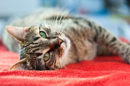 かわいい猫と緩和 (目の焦点) のベッドの上の夢