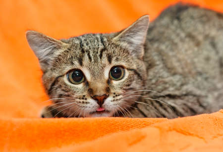 dilated pupils: Scared Cat with dilated pupils on orange  Stock Photo