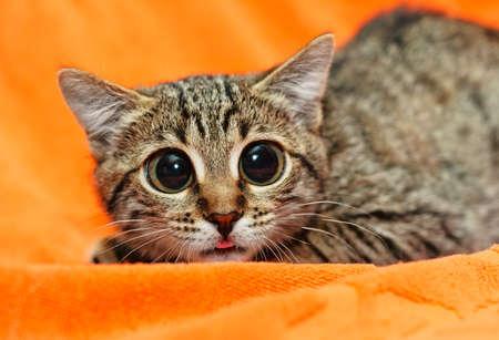 behavior: Funny Cat with big eyes on orange