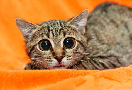 Grappige Kat met grote ogen op oranje