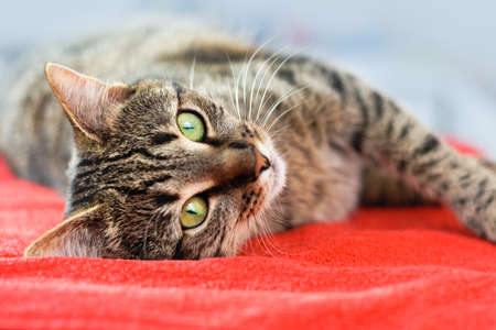 Cute cat relaxes and dreams on a bed Archivio Fotografico
