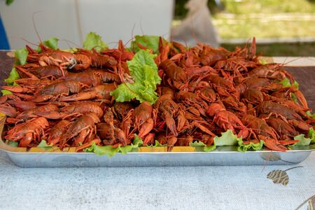 red lobster boiled red crayfish food. street food festival Stock Photo