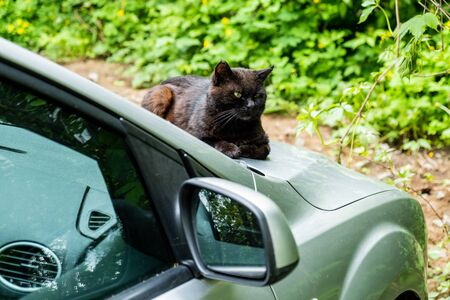 Homeless black cat sitting on the hood of a gray car.