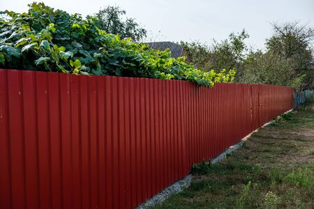 Corrugated red iron fence on the background of green trees. Standard-Bild