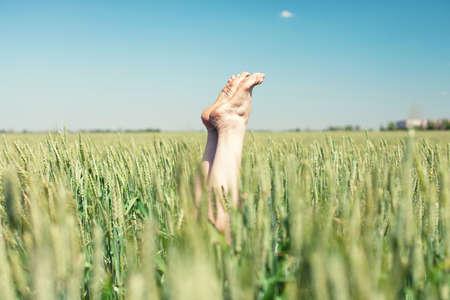 Voeten met oren tarwe in een groen veld Stockfoto - 41068180