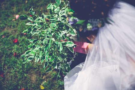 De zorgvuldige persoon plant een groene boom op de natuur