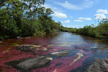Canio Cristales mountain river  Colombia